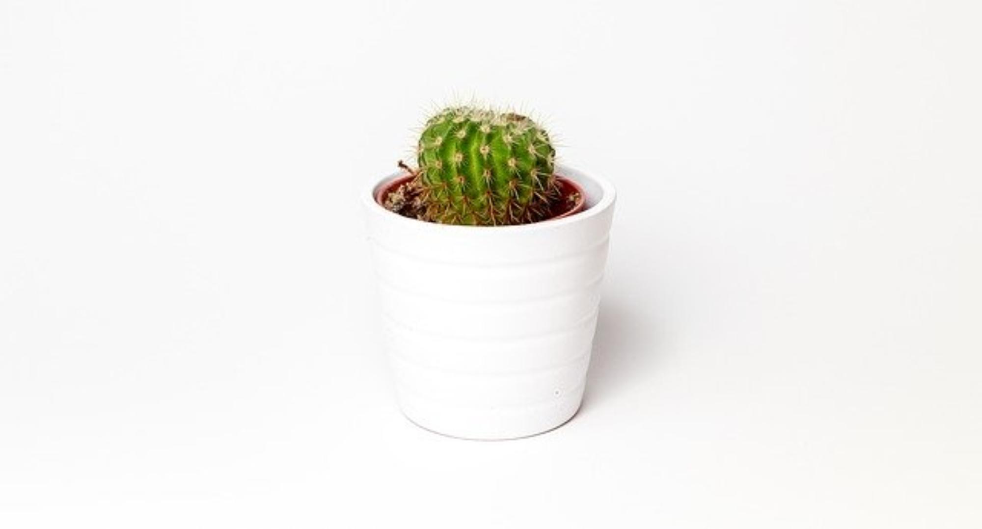 Zagrożenia kaktusów w naturalnych stanowiskach