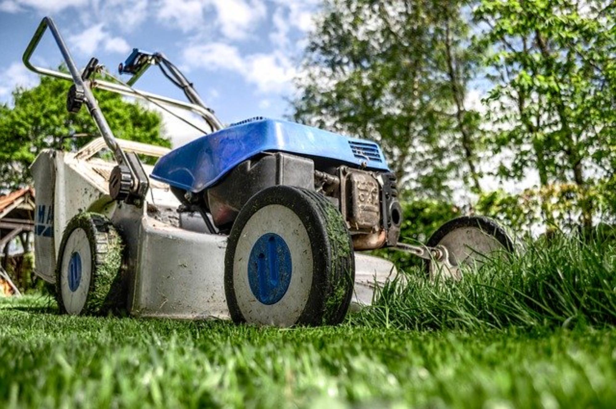 Pielęgnacja trawnika w ciągu roku