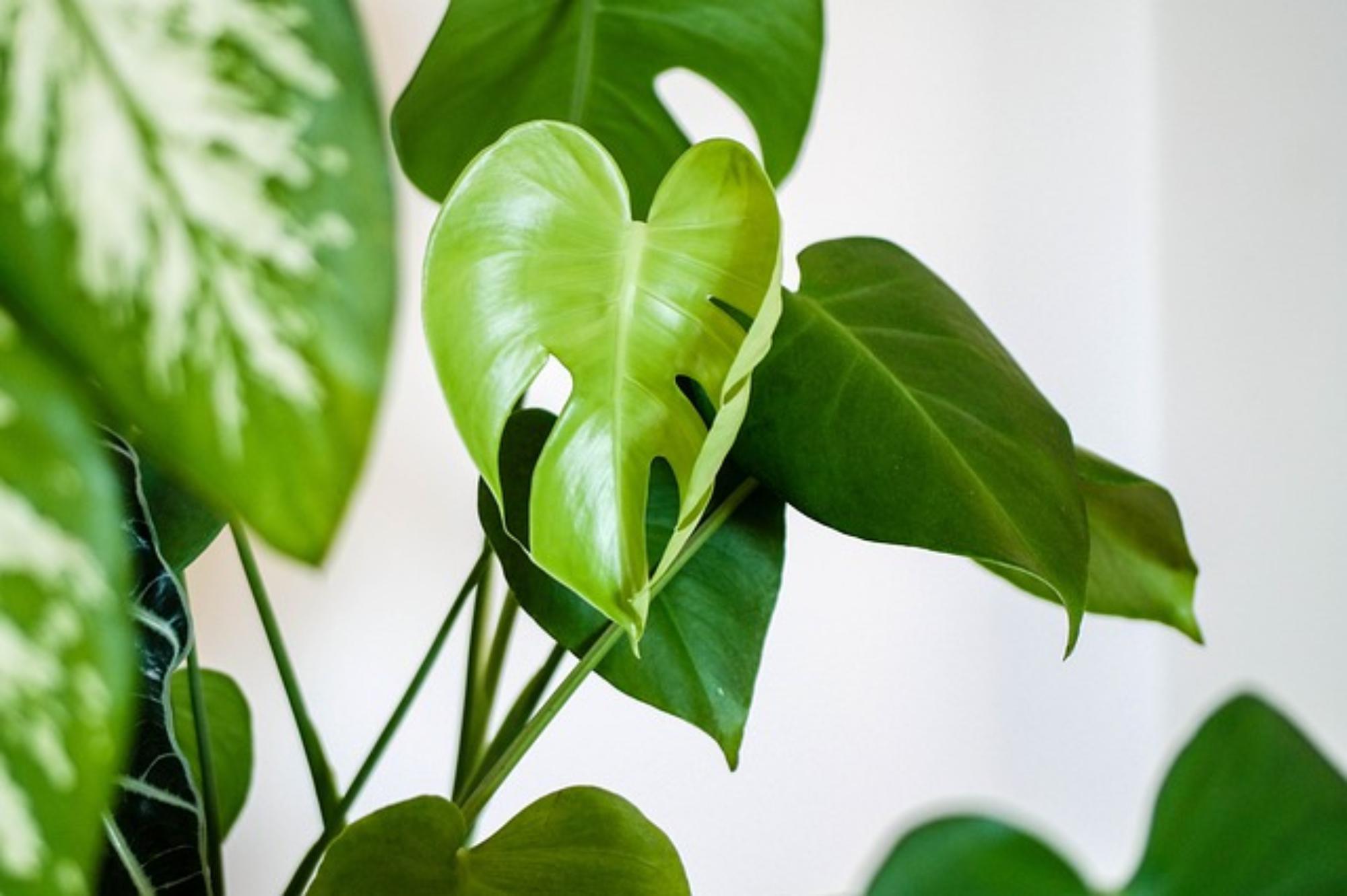Jak dbać o egzotyczne rośliny doniczkowe?
