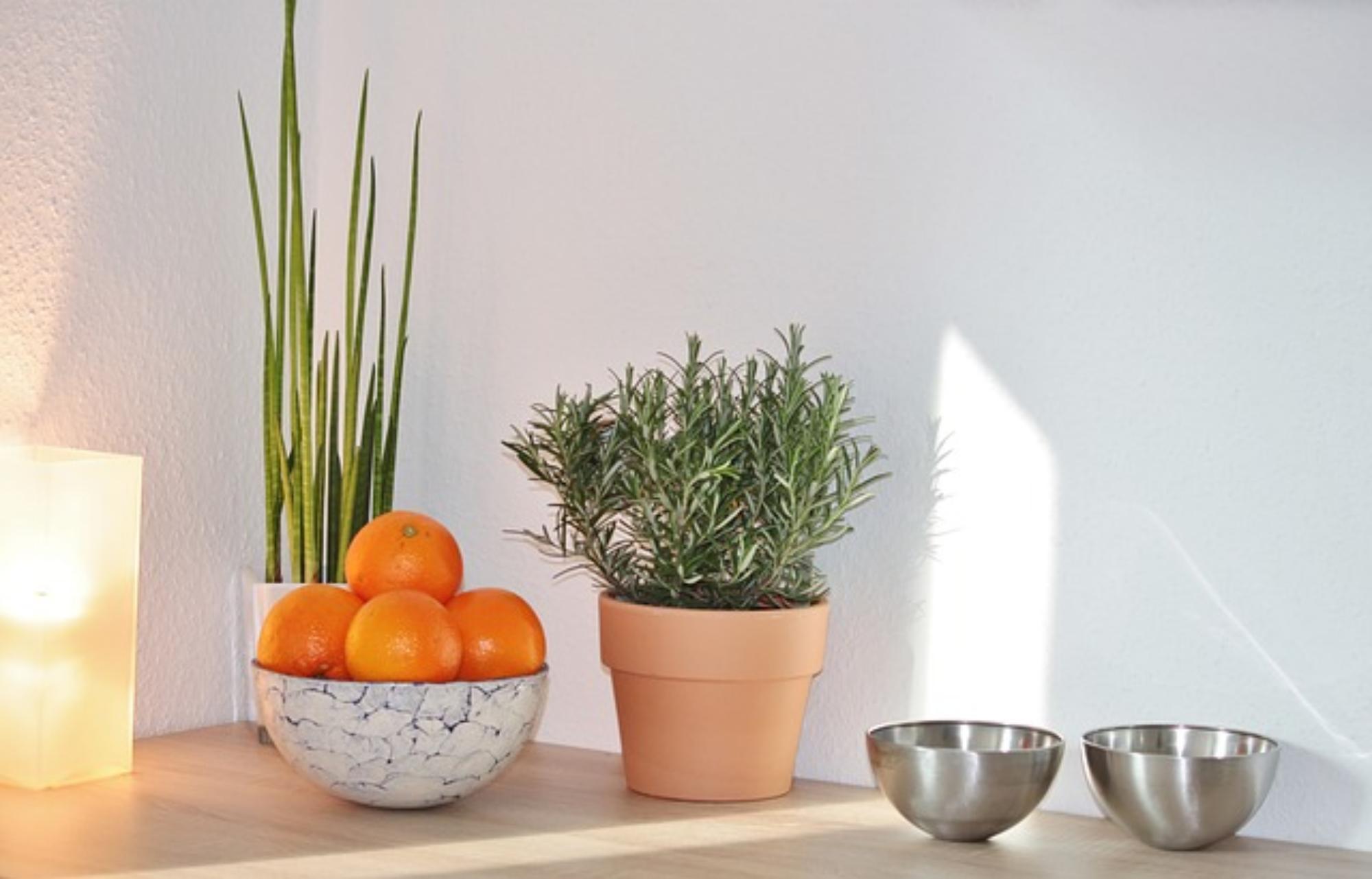 Coś dla oka i dla smaku. Jakie rośliny do kuchni?
