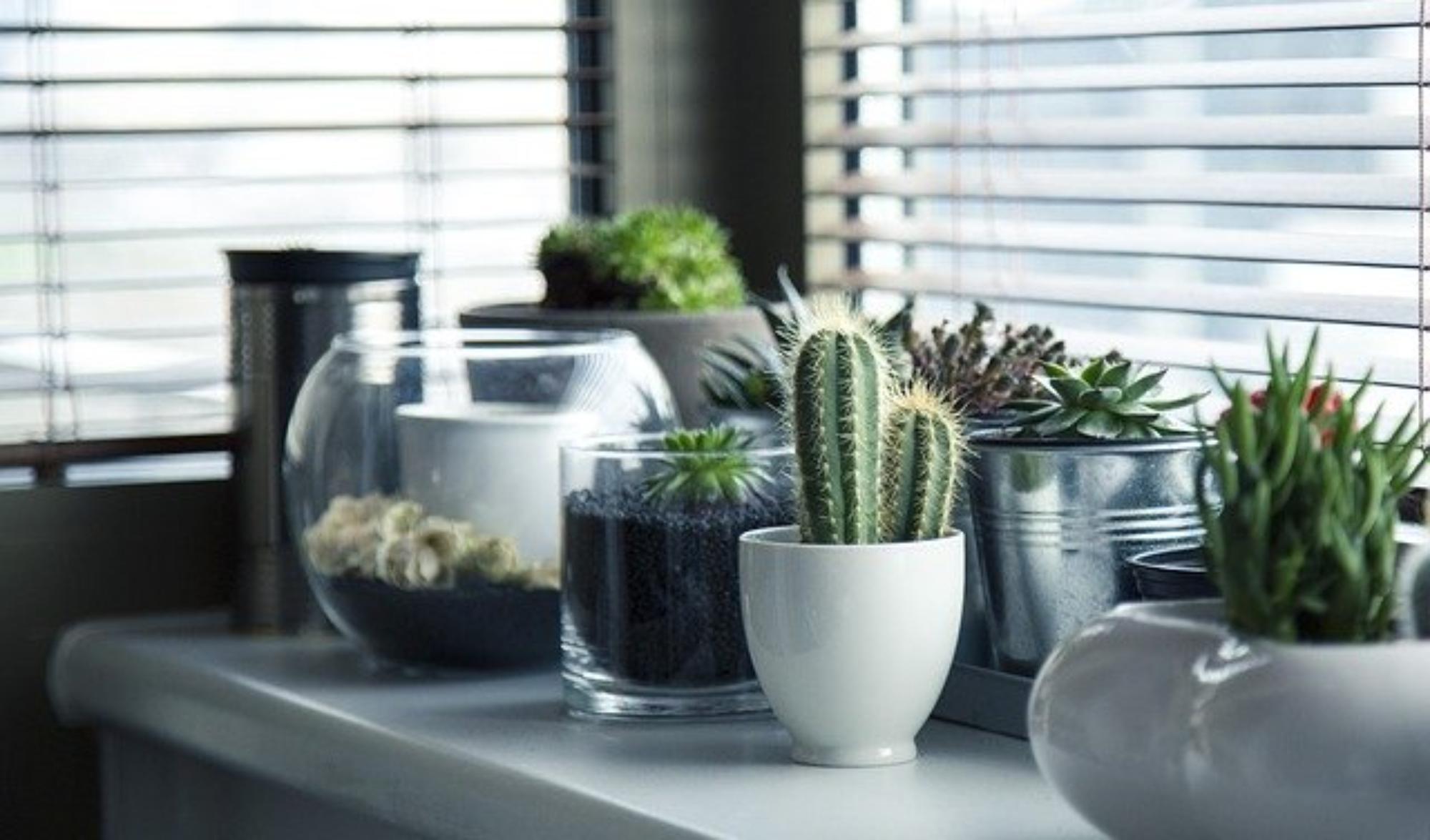 Gatunki kaktusów – czyli coś dla oka